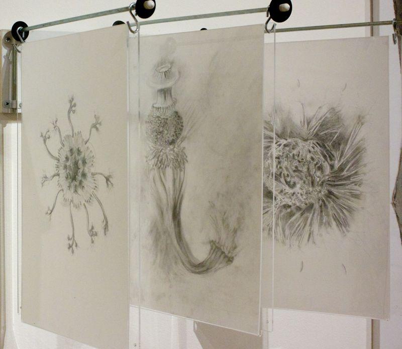 Drawings | Dorothea Osborn